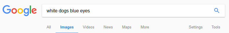 Displaying the google tabs under the search bar